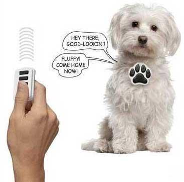 Talking-Dog-Collar