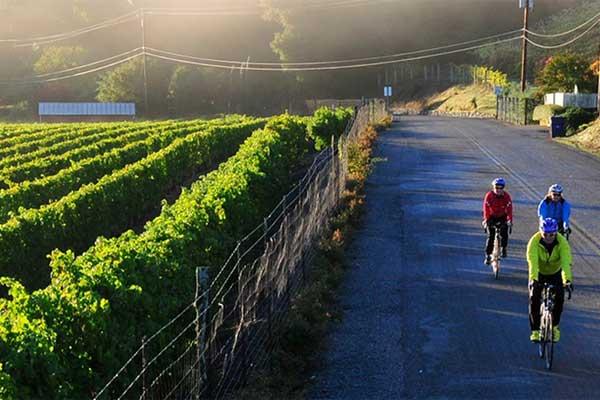 Wine-Country-Napa-Sonoma-Bike