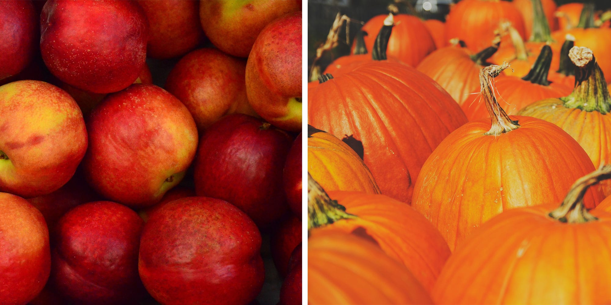 Apples Vs Pumpkins: What's The Best Fall Food?