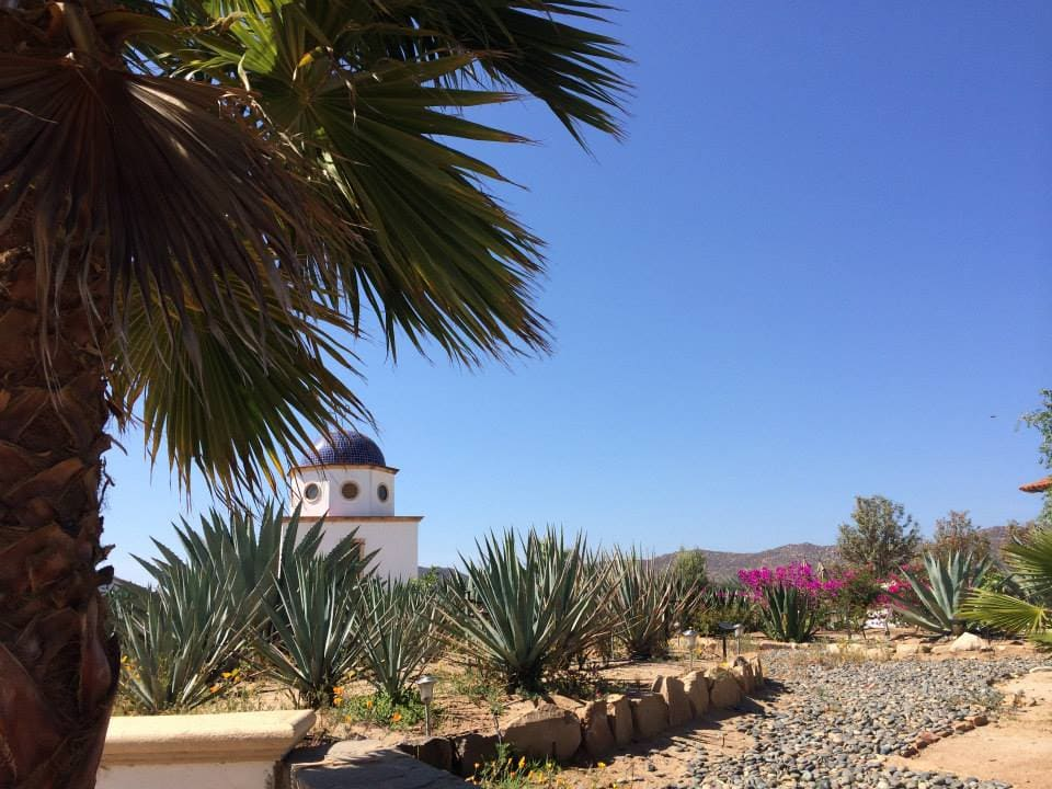 Lesser-known wine regions - baja mexico