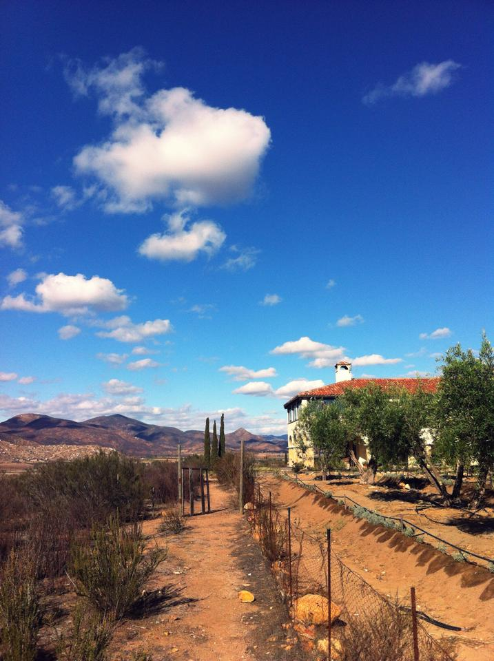 Guadalupe wine valley - baja california
