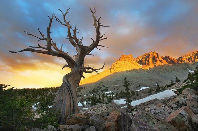 Fall In Love With Great Basin National Park Samantha Brown S Places To Love