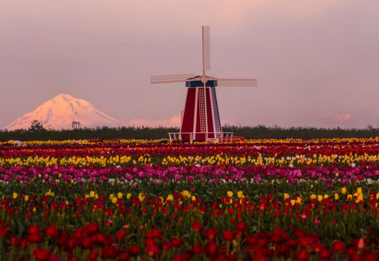 Mt Hood - Wooden show tulip farm