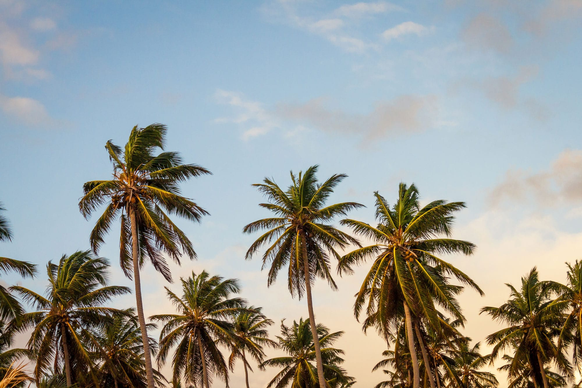 5 US Destinations That Nearly Guarantee Sunshine
