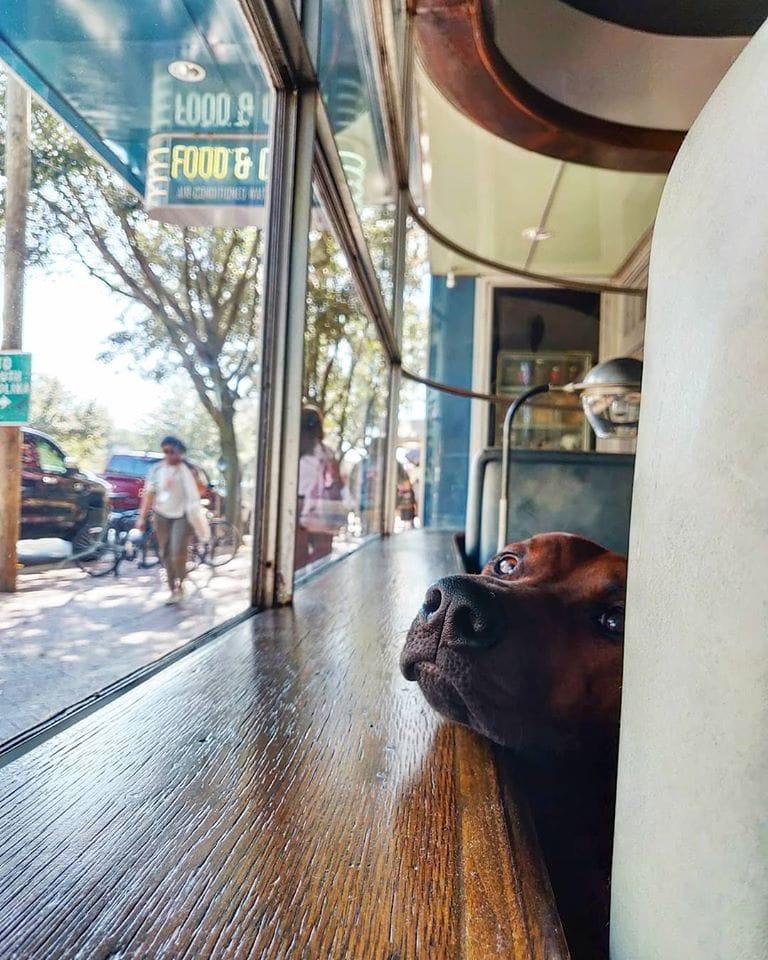The perfect long weekend in Savannah, Georgia