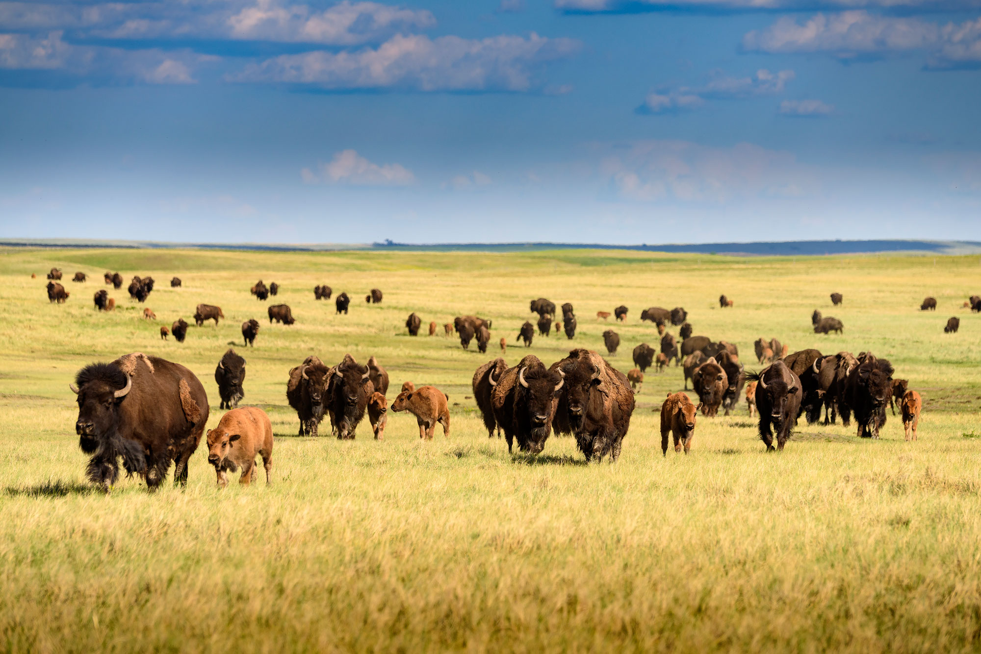 South Dakota's western region delivers on its promise as one of America's most epic road trip destinations.